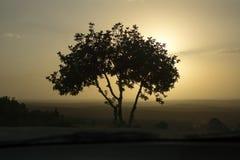 Le seul arbre dans le coucher du soleil Photos stock
