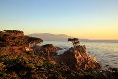 Le seul arbre de Cypress images libres de droits