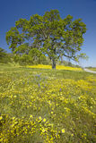 Le seul arbre et le bouquet coloré de la source fleurit photographie stock