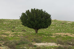 Le seul arbre sur les pierres Photo stock