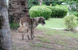 Le seul chien égaré vivent dans le parc Images stock