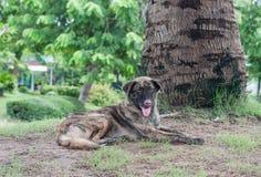Le seul chien égaré vivent dans le parc Image stock
