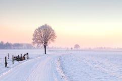 le seul hiver debout d'arbre de coucher du soleil Image stock