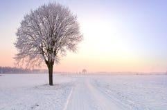 le seul hiver debout d'arbre de coucher du soleil Photographie stock libre de droits