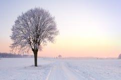 le seul hiver debout d'arbre de coucher du soleil Images stock