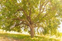 Le shandow de l'arbre un s'embranche écologie image stock