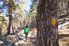 Le signe a peint sur l'arbre pour guider la manière pour des randonneurs sur un tapotement de forêt Image libre de droits