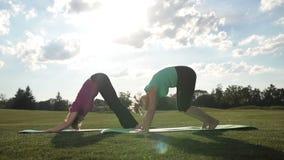 Le signore sportive eleganti che praticano l'yoga posano in parco stock footage