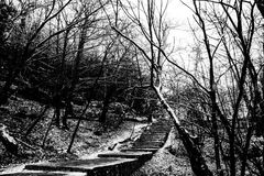 Le silence de la forêt Photo libre de droits