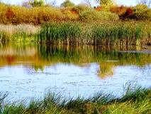Soirée dans le marais image libre de droits