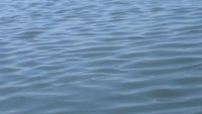 Le sillage de baie se précipite par clips vidéos