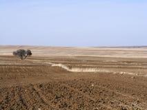 Le sillage de la nature dans le climat de steppe et le climat de steppe, l'amour de la nature, la vue de venir de ressort, Photographie stock