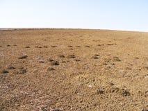 Le sillage de la nature dans le climat de steppe et le climat de steppe, l'amour de la nature, la vue de venir de ressort, Images stock