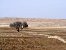 Le sillage de la nature dans le climat de steppe et le climat de steppe, l'amour de la nature, la vue de venir de ressort, Photo libre de droits