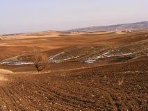 Le sillage de la nature dans le climat de steppe et le climat de steppe, l'amour de la nature, la vue de venir de ressort, Photographie stock libre de droits