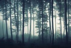 Le siluette degli alberi in mattina si illuminano in una foresta fotografie stock