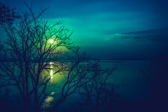 Le siluette dell'albero asciutto contro il cielo e si rannuvolano il mare tranquillo Immagine Stock Libera da Diritti
