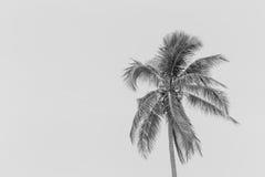 Le siluette nere realistiche delle illustrazioni hanno isolato la palma tropicale Immagine Stock