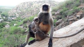 Le singe Images libres de droits