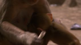 Le singe d'enfant l'embrassant est mère banque de vidéos