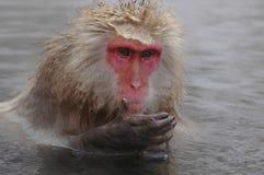 Le singe de neige onsen dedans Images stock