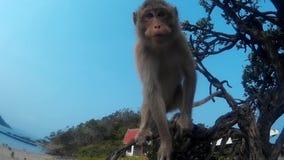 Le singe est étonné et regard à l'appareil-photo banque de vidéos