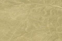 Le singe, lignes de Nazca, Pérou image libre de droits