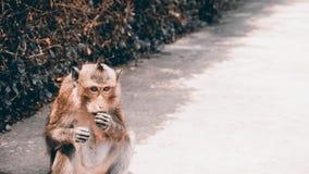 Le singe mange de la nourriture Photo stock