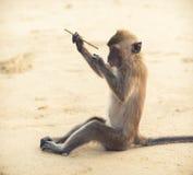 Le singe réfléchit sur la poésie d'écriture Photographie stock libre de droits
