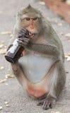 Le singe rongent le chapeau de la bouteille Images stock