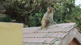 Le singe sautant d'une poubelle à la barrière clips vidéos