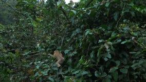 Le singe sautant sur une branche clips vidéos