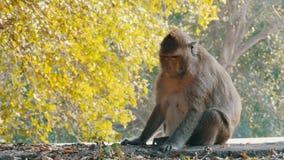 Le singe se repose près de la route en parc national thailand clips vidéos
