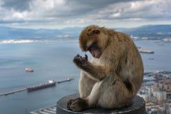 Le singe se repose sur le balcon et regarde la baie du Gibraltar Photographie stock libre de droits