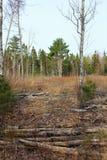 Le site d'une opération de notation dans la région forestière inexploitée de Nova Scotia rurale pendant le printemps images stock
