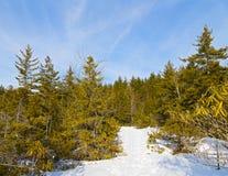 Le ski met en place en Virginie Occidentale avec le fond pittoresque des arbres forestiers Image stock