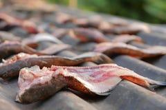 Le snakehead sec pêchent exposé avec la lumière du soleil sur le zinc noir photos stock