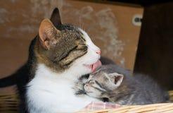 Le soin de la mère Photo libre de droits