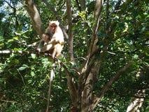 Le soin de la mère est le précieux même pour des singes photographie stock libre de droits