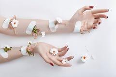 Le soin de main d'art de mode et les fleurs pourpres se développent hors des mains de femmes Photos libres de droits