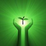 Le soin de main protègent la plante verte Photo stock