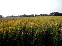 Le soja de fleur Photographie stock