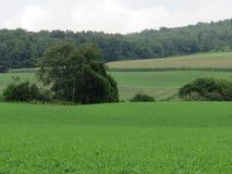 Le sol fertile produit la végétation vert clair photos libres de droits