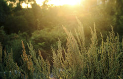 Le soleil Images libres de droits