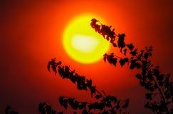 Le soleil ardent Photos libres de droits