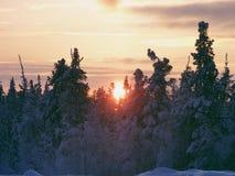 le soleil au-dessus de la forêt d'hiver Photos stock