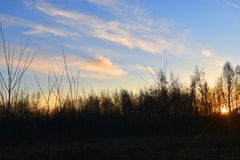 Le soleil brillant derri?re les arbres photo stock