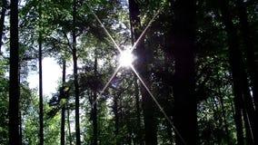 Le soleil brillant par les arbres de la forêt banque de vidéos