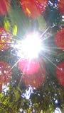 le soleil brillant sous l'arbre Photos stock