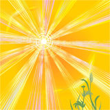 Le soleil chaud de l'été Images stock